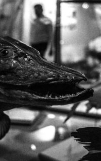 Жизнь на Созвездии Рыб (Астрахань)