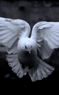 Час Святого Духа